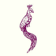Bird with long tail sitting (peacock), hand drawn doodle, sketch in naïve style, outline vector illustration