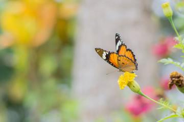 butterflies in a beautiful flower garden