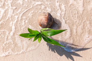 growing coconut on sandy beach with wave. Top view