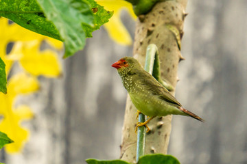 Exotic birds and animals in wildlife in natural setting.