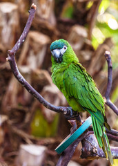 parrot Exotic birds and animals in wildlife in natural setting.