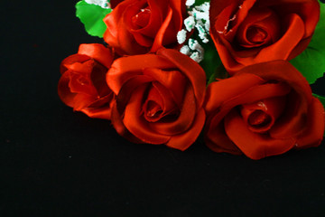 Flower rose red on black background. Photoshoot Valentine day