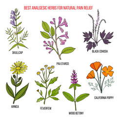 Best analgesic natural herbs for pain relief