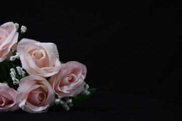 Photoshoot of pink rose on black background. Valentine day