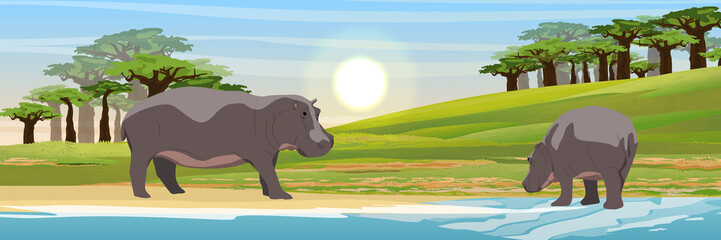 Two hippos in the savannah. Mother and cub. Baobabs and the lake. Wild animals of Africa. Realistic Vector Landscape