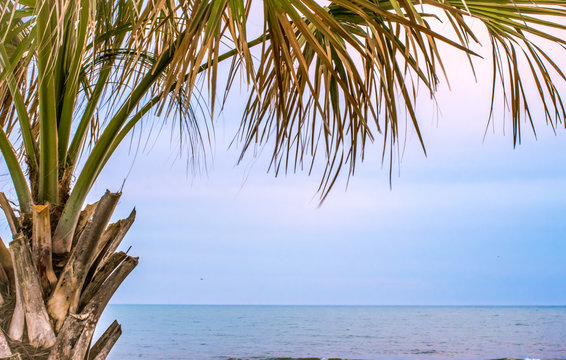 Tropical Palm Background. Palmetto tree on the Atlantic Ocean with copy space. Myrtle Beach, South Carolina.