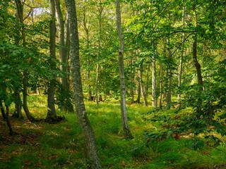 Landschaft im Nationalpark Vorpommersche Boddenlandschaft zwischen Müggenburg bei Zingst, Osterwald und Sundischer Wiese, Mecklenburg Vorpommern, Deutschland