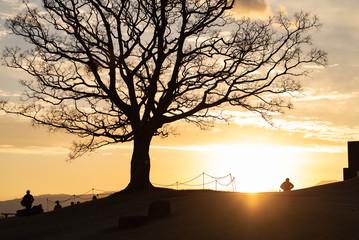夕暮れの木と人のシルエット