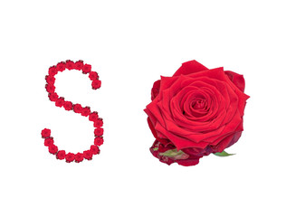Fine art still life color image of the word so constructed from floral/flower characters/letter made of rose blossom macros on white background