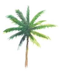 coconut tree watercolor illustration, isolated nature on white background