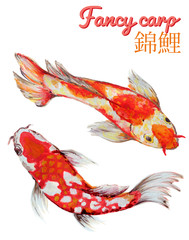 Watercolor oriental Fancy carp fish Koi set Isolated Underwater wildlife illustration