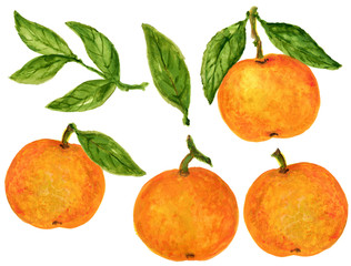 Mandarin Tangerine Orange Watercolor Gouache illustration Citrus fruit branch orange isolated on white background