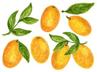 Kumquat Orange Watercolor Gouache illustration Citrus fruit branch orange isolated on white background