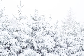 Wonderland Fir trees covered snow Beautiful Winter landscape background with snow covered trees Beauty winter backdrop Frosty trees in snowy forest Branches with snow Winter pattern or background
