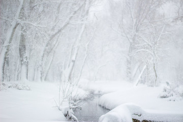 Peace winter nature Wonderland Beauty sunny winter backdrop  Beautiful Winter landscape scene background with snow covered trees and ice river   Frosty trees in snowy forest