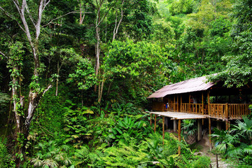 Jungle cottage in the forest, Minca, Colombia, South America