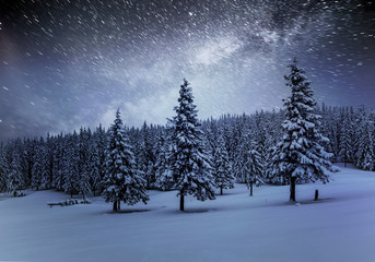 Dairy Star Trek in the winter woods. Dramatic and picturesque scene. In anticipation of the holiday. Carpathian Ukraine