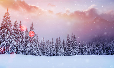 Mysterious landscape majestic mountains in winter. Magical snow covered tree. Photo greeting card. Bokeh light effect, soft filter. Carpathian Ukraine Europe