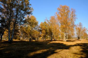 Herbst im Naturschutzgebiet Ried bei Grettstadt, Landkreis Schweinfurt, Unterfranken, Bayern, Deutschland