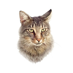 Cute cat isolated on white background. Realistic drawing of a cat with green eyes. Design template. Good for print on pillow, T-shirt. Art background, banner for pet shop. Hand painted illustration