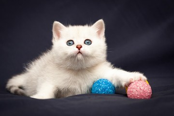 Cute little white British kitten with pink nose caught a pink ball with claws paw