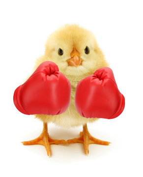 Crazy chick with red boxing gloves