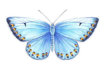Watercolor silver-studded blue butterfly. Hand drawn illustration isolated on white background