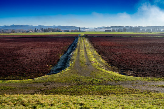 Dormant cranberry fields in Langley British Columbia