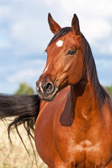 Portrait of nice brown horse