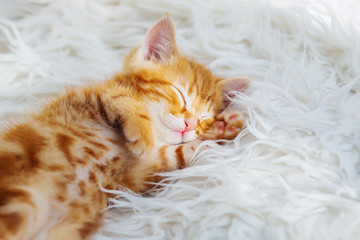 Cute little red kitten sleeps on fur white