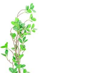 緑の葉のある枝 背景素材
