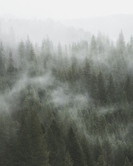 Fog Passing Through Pine Tree Forest - Moody Photograph in Portrait Orientation