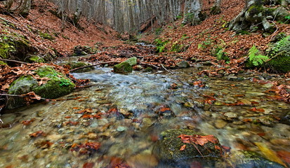 Little river streaming in a beech wood in autumn, Camigliatello SIlano, Sila National Park, Calabria, Italy