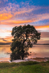 Tree of Life - Sunrise Waterscape