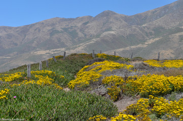 Spring flowers at the mountains