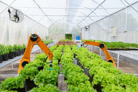 Smart robotic farmers harvest in agriculture futuristic robot automation to work technology increase efficiency