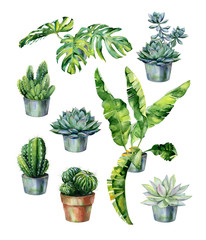 Watercolor illustration of tropical leaves, dense jungle. Cactus and succulent in pot isolated on white. Watercolor echeveria illustration, botanical painting of dudleya and zwartkop.
