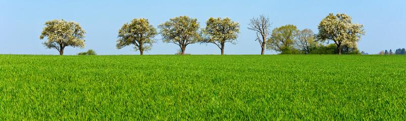 Frühling, Landschaft, Obstbäume, Reihe, Landwirtschaft