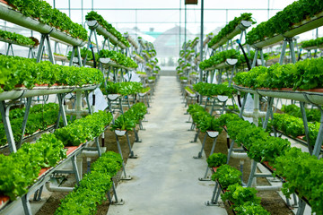 Hydroponic vertical farming systems Wall mural