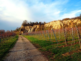 Vineyards near the low hill on a sunny day