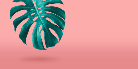 Wall Mural - Tropical monstera leaf on coral color background minimal summer