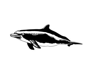 Graphical hand-drawn dolphin isolated on white background,vector illustration,tattoo