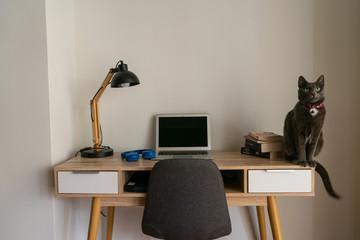 Cat sitting on home office desk