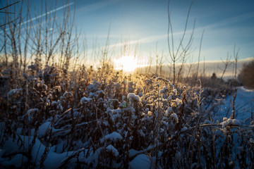 winter sunset with frosty grass