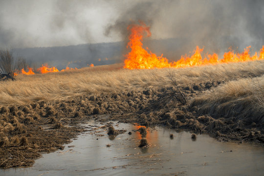 Fire in meadows near a river with black heavy smoke. Nature disaster, environmental problem of air pollution.