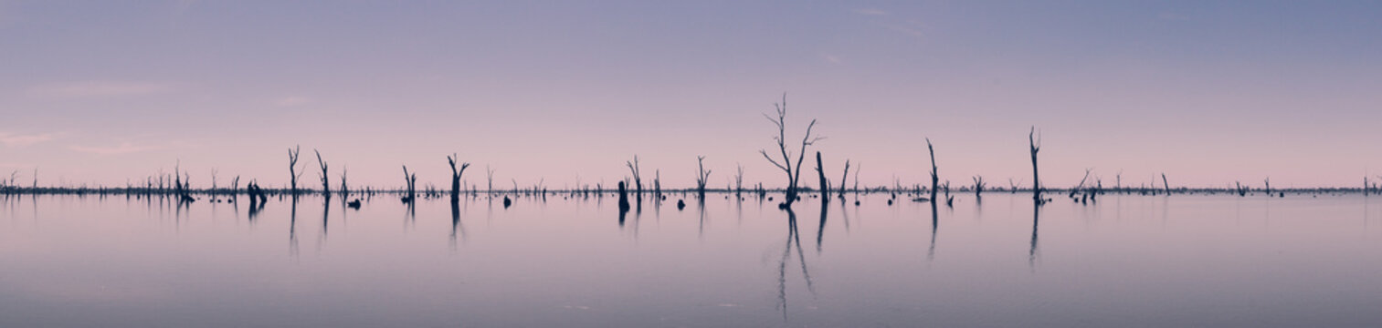 Photograph of dead tree trunks sticking out of the water, Australia