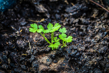young plant in soil