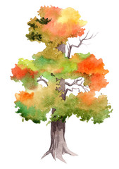 Watercolor illustration with autumn tree. Hand drawn illustration