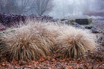Gräser im Staudenbeet im Winter-Stadtgarten Bottrop