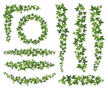 Green ivy. Leaves on hanging creepers branches. Wall climbing ivy decoration wall plant vector set isolated